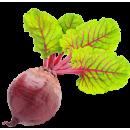 """Где можно купить недорого семена свеклы! Заказывайте онлайн семена овощей почтой на сайте: интернет магазина """"Элегант"""" Сумы (Украина) - каталог семян сезон 2014, 2015 годы (смотреть бесплатно фото семя дети)"""