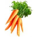 """Где можно купить онлайн семена моркови! Заказывайте недорого семена овощей почтой на сайте: интернет магазина """"Элегант"""" Сумы (Украина) - каталог семян сезон 2014, 2015 годы (смотреть бесплатно фото семя дети)"""