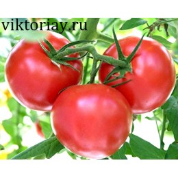 "Семена помидор сорт ""Дар Заволжья розовый"""
