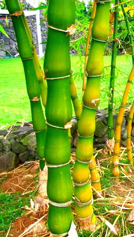 """В данном разделе Вы, Дорогие покупатели, найдете носки из класса ткани: бамбук от известных мировых производителей нижнего белья, и сможете носки купить мужские из бамбука. Бамбуковое волокно — регенерированное целлюлозное волокно, изготовленное из мякоти бамбука. Тонкостью и белизной напоминает вискозу, обладает высокой прочностью. Бамбуковое волокно устраняет запахи, останавливает рост бактерий и убивает их. Выделено антибактериальное вещество бамбука. Способность бамбукового волокна останавливать рост и убивать бактерий сохраняется даже после пятидесяти стирок. Уникальные природные свойства материала бамбук: прекрасная воздухопроницаемость, гигроскопичность, способность к быстрому высыханию. Помимо этого, носки из бамбука, обладают уникальной эластичностью, естественными антибактериальными свойствами, а также функцией отражения ультрафиолетовых лучей. Носки из бамбука являются достаточно стойкий к износу, прекрасно держат цвет, удивительно приятны на ощупь, комфортны при соприкосновении с кожей, имеют красивый внешний вид и обладают оздоровительным эффектом. Благодаря своим неповторимым качествам трикотажные изделия из бамбука пользуются очень большой популярностью среди потребителей одежды: домашнего текстиля (белье нижнее, майка, футболка, носки). На нашем сайте: интернет магазин """"Элегант"""" (смотреть носки), Вас порадуют наши цены и акции, большой выбор моделей носков из класса ткани: бамбук и, само собой, высочайшее качество продукции. Ни для кого не секрет, что носки мужские – эта та часть нашего гардероба, которую мы носим пожалуй дольше всего в течение дня. Поэтому крайне важно, чтобы его комфорт, удобство и внешний вид были на высоте. Носки мужские - это неотъемлемая часть одежды и необходимость в ней не исчезает никогда, поэтому лучше всего носки купить в интернет магазине нижнее белье """"Элегант"""" мода нижнего белья сезона 2014 года (смотреть носки мужские онлайн фото). Желаем Вам, Дорогие, приятных и успешных покупок в нашем интернет магазине!"""