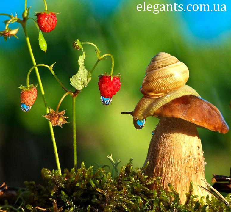 ягоды,грибы ягоды,ягоды грибы,купить грибы,сушенные грибы,консервированые грибы,салат с грибами,рецепты с грибами,грибы фото,заказывайте гриба,купить онлайн белые грибы,курица с грибами,грибы в духовке,цветы,купить цветы,семена цветов,семена,семя,семю,купить семена,купить семян,семена почтой,арбуз,семена магазин,интернет семена,интернет семян,интернет магазин семян,куплю семена,каталог семена,каталог семян,капуста,перец,сладкий перец,болгарский перец,морковь,семена моркови,полезные свойства моркови,новости,смотреть ягоды,смотреть грибы