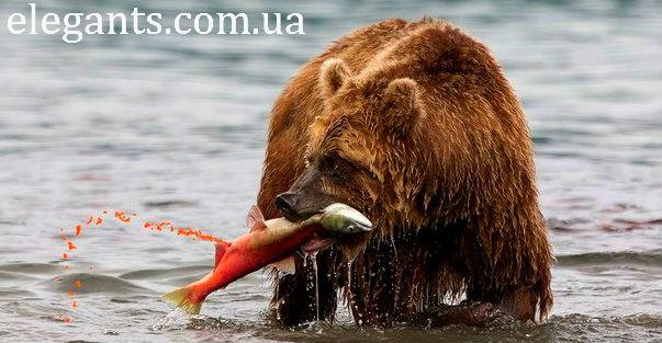 икра лососевая,икра лососевая гольца,купить икра лососевая гольца,икра лососевая гольца купить,икра лососевая гольца купить в Сумах,икра лососевая гольца купить в Украине,морепродукты,черная икра белуги,черная икра белуги купить,морепродукты,икра,белуга
