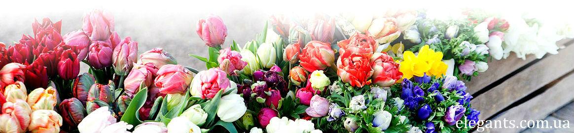 Цветы баннер