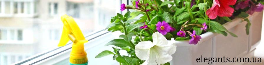 Комнатные цветы интернет-магазин