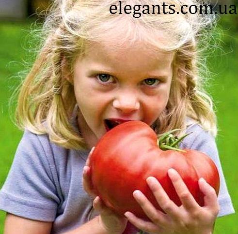 ягоды,грибы ягоды,ягоды грибы,купить грибы,сушенные грибы,консервированые грибы,салат с грибами,рецепты с грибами,грибы фото,заказывайте гриба,купить онлайн белые грибы,курица с грибами,грибы в духовке,цветы,купить цветы,семена цветов,семена,семя,семю,купить семена,купить семян,семена почтой,арбуз,семена магазин,интернет семена,интернет семян,интернет магазин семян,куплю семена,каталог семена,каталог семян,капуста,перец,сладкий перец,болгарский перец,морковь,семена моркови,полезные свойства моркови,новости,смотреть ягоды,смотреть грибы,семена,семя,семю,купить семена,купить семян,семена почтой,арбуз,семена магазин,интернет семена,интернет семян,интернет магазин семян,куплю семена,каталог семена,каталог семян,семена из голландии и германии,семена голландские,семена из голландии цена,семена из голландии украина,семена из китая,семена из голландии цветов,семена из голландии оптом,семена из голландии в киеве,семена,семя,семю,купить семена,купить семян,семена почтой,арбуз,семена магазин,интернет семена,интернет семян,интернет магазин семян,куплю семена,каталог семена,каталог семян