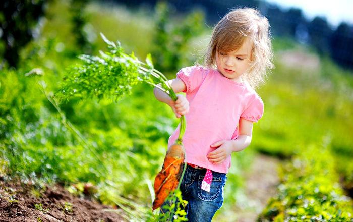 семена,семя,семю,купить семена,купить семян,семена почтой,арбуз,семена магазин,интернет семена,интернет семян,интернет магазин семян,куплю семена,каталог семена,каталог семян